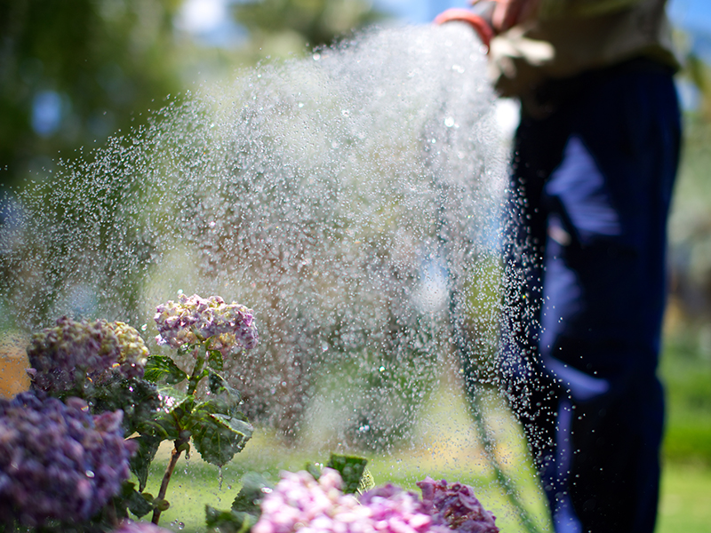 Image of a person watering a garden
