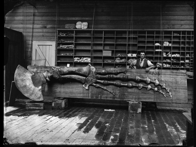 Whale bones in museum