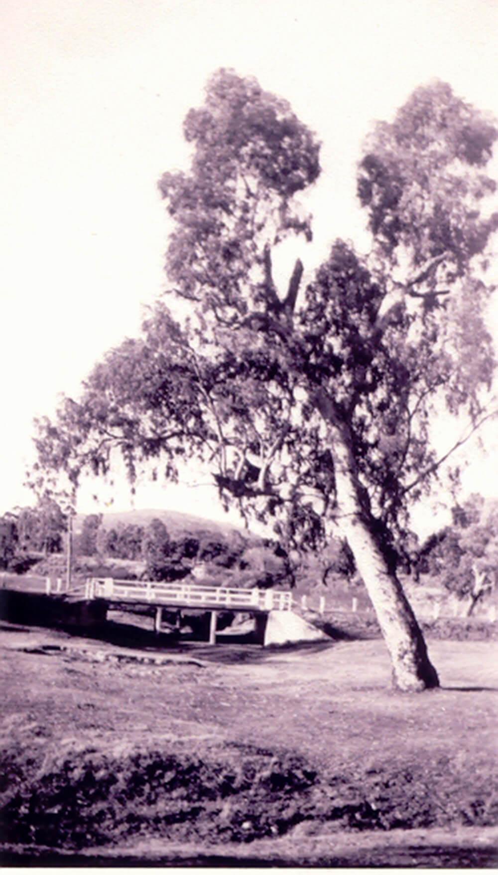 First bridge on Urana Road, 1931<br> Image courtesy of Lavington & District Family History Society