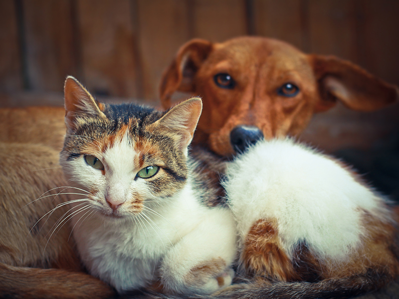 Image of a cat and dog